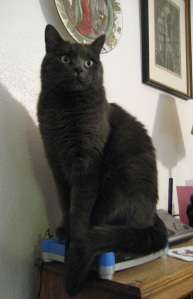 """Mia Sopaipilla auditions for the starring role in a feline take on the noir classic """"The Meowtese Falcon."""""""