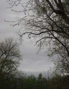 Rainy May day