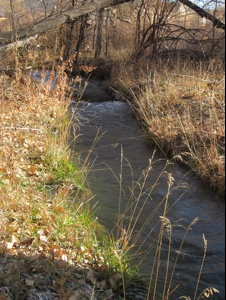 Cañon City creek