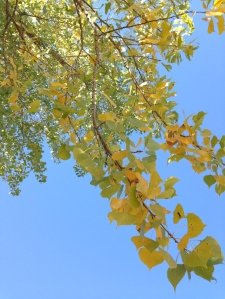 The leaves are turning rapidly here in Bibleburg, despite the best efforts of Congress to halt the march of progress.
