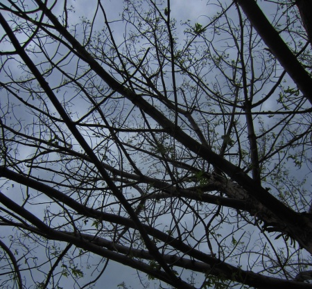 Our maple isn't quite down to its last leaf, but there's plenty of bald patches up there and more storms in the forecast.