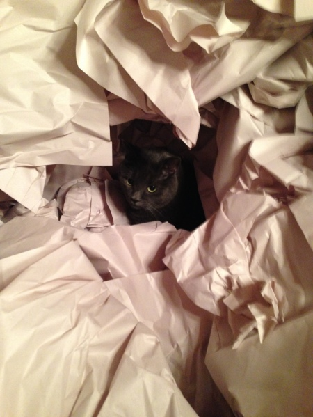 All it takes to entertain Miss Mia Sopaipilla is a pile of wrapping paper the size of a former Amazonian rain forest. Thanks, Mayflower!
