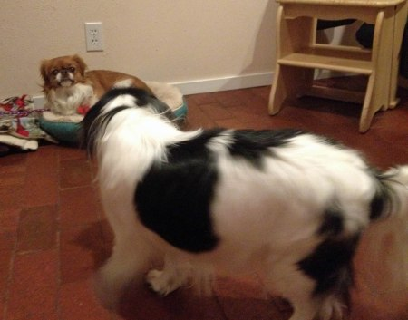 The Boo was quite taken with Jazzy, though she was less enamored of him. Photo: Herself