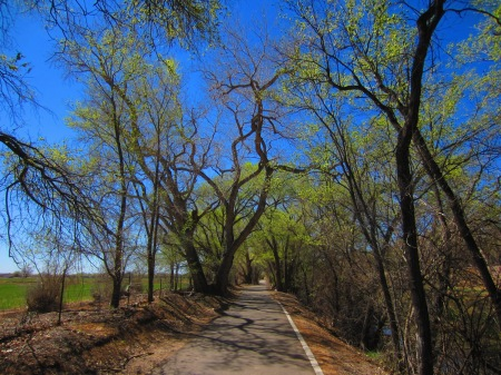 A stretch of the Paseo del Bosque trail, south of the zoo.