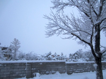 It started like not so much of a much, but blossomed into a half-foot of the white stuff. Not bad for the Duke City.