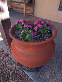 And more petunias.