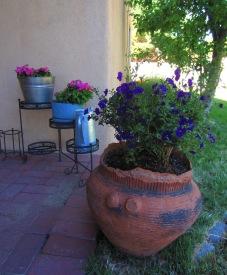 Still more petunias, plus a blue potato bush.
