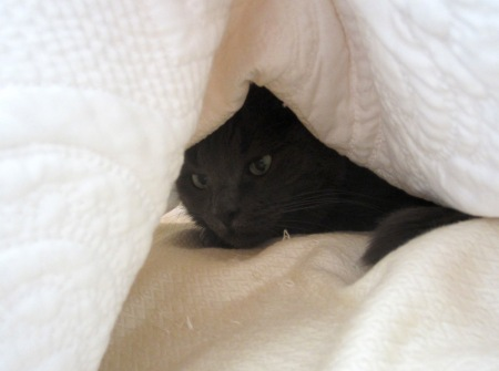 Miss Mia Sopaipilla enjoys making a cave out of the coverlet on our bed.