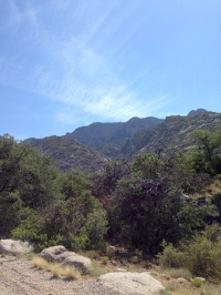 Near the top of the La Cueva picnic area.