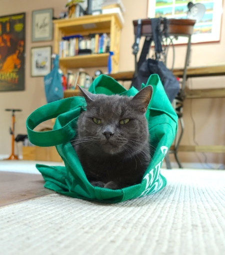 Miss Mia in the bag